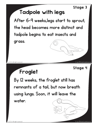 stages of a frog