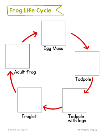 graphic about Frog Life Cycle Printable named Frog Existence Cycle Slice and Paste