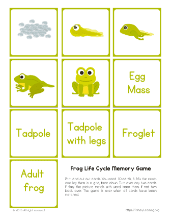 picture relating to Printable Memory Games identified as Frog Everyday living Cycle Printable Memory Sport