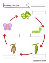 label butterfly life cycle