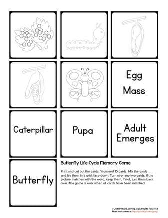 butterfly life cycle game