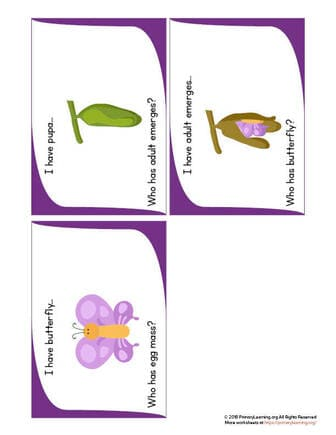stages of the butterfly life cycle
