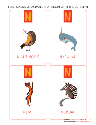 animals that begin with the letter n