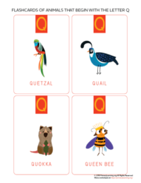 animals that begin with the letter q