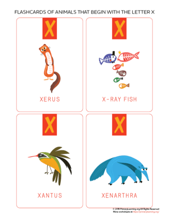 animals that begin with the letter x