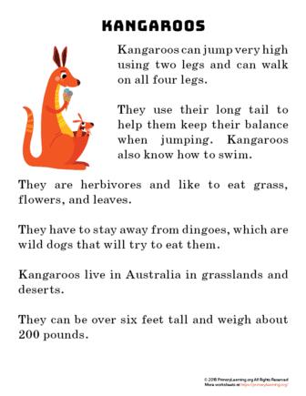 kangaroo reading passage