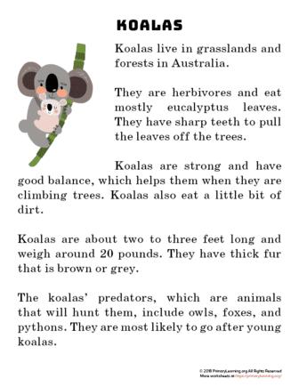 koala reading passage