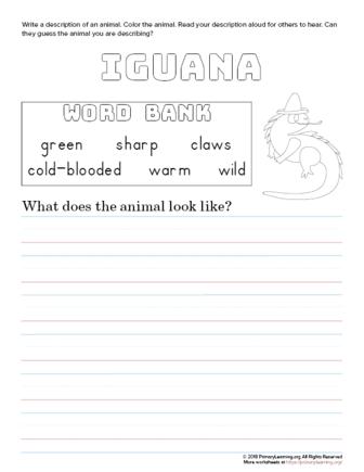tell about iguana