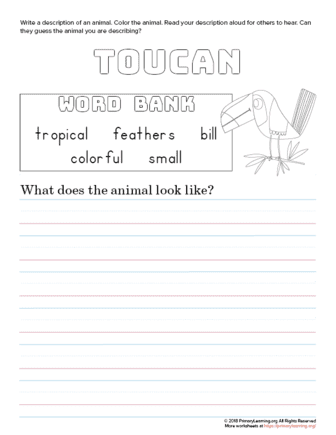 tell about toucan