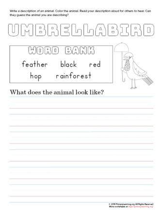 tell about umbrellabird