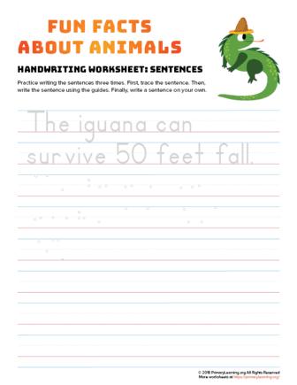 sentence writing iguana