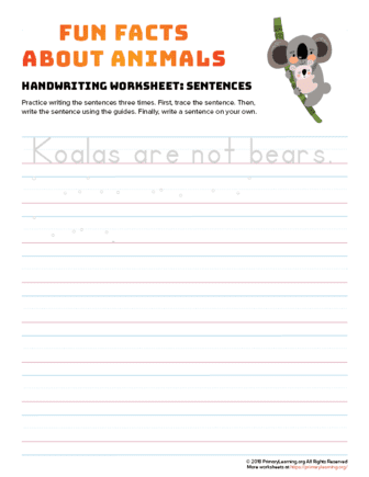 sentence writing koala