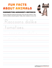 sentence writing raccoon