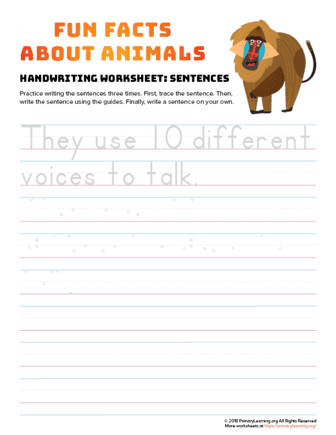 sentence writing yellow baboon