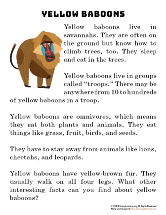 yellow baboon reading passage