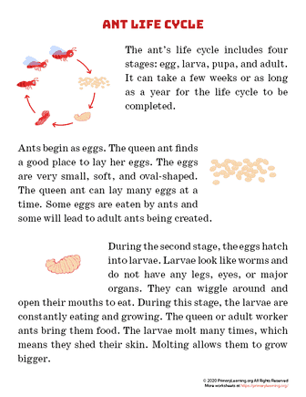 ant life cycle article